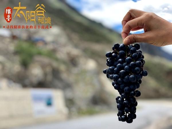 把驼峰刻进红酒 每一颗扶贫葡萄都历经磨砺 抵达优雅